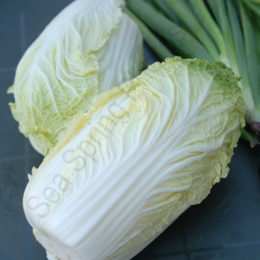 Chinese Cabbage var. Apex