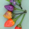 bolivian rainbow chilli