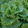 lettony lettuce