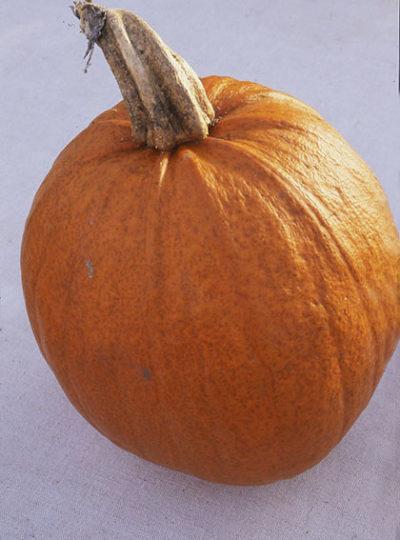 triple treat pumpkin